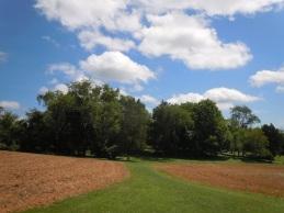 Ellwood on Wilderness Battlefield