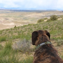 Furry B enjoying the View