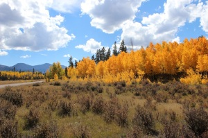 Aspen Grove on Weston Pass