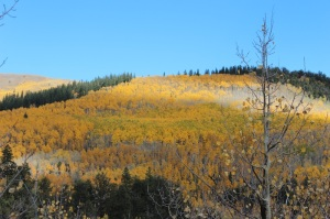 Gold Aspens Weston Pass