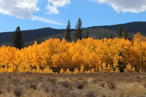 Weston Pass Aspens